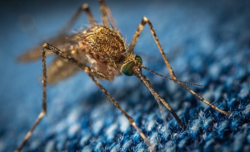 lupta cu țânțarii